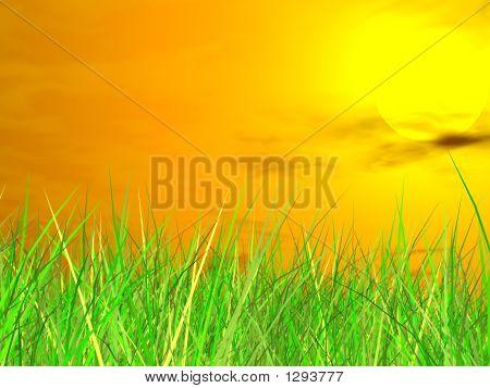 Fresh Green Grass On  Sundown Background