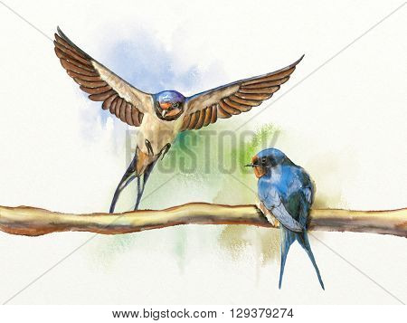 Two barn swallows, one resting on a branch and another landing on the same branch. Digital watercolor illustration.