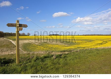 a wooden footpath sign post in agricultural countryside with oilseed rape and wheat crops under a blue sky in springtime