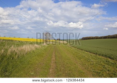 a grassy bridleway running through crops of wheat and oilseed rape with views of rolling hills in springtime under a blue sky