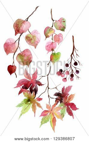 Watercolor autumn leaves branches and berry. Linden japanese maple and berries branches set isolated on white background. Hand painted autumn garden elements illustration