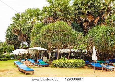 sunbeds and deck chairs under the trees thailand tropical tropics it