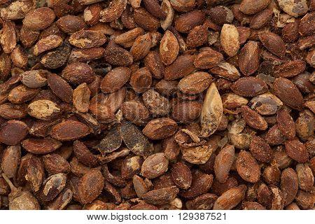 Macro closeup background texture of Organic Black oil plant or Climbing staff tree or  Malkangani or Jyotishmati (Celastrus paniculatus) seeds.