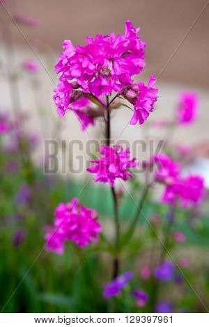 Pink flower with shallow focus