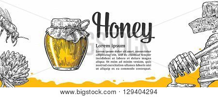 Honey set. Jars beer and honeycomb. Hand drawn design element. Vector engraved illustration. Isolated on white background.