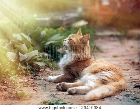 Cat on a path basking in the sun. Bliss cat, the warm sun. The cat looks at Rays