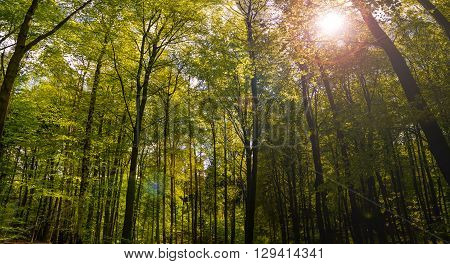 Summer Forrest Sunrise Dawn in the forest Saxony Swiss sun