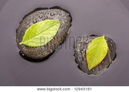 Zen piedras y hojas con gotas de agua