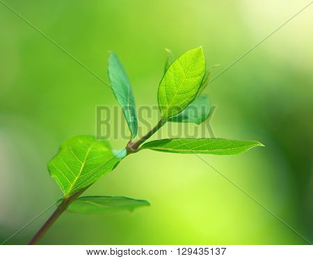 Spring leaf. Composition of nature.