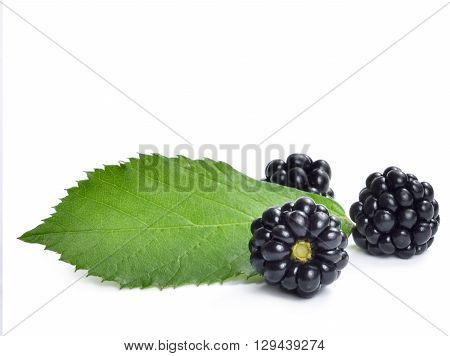 Fresh blackberry with leaf and copy space. Ripe blackberries isolated on white background.
