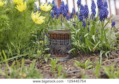 spring adonis grape hyacinth and glass holder with glass of tea