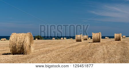 Round bales of hay after harvesting near the sea. Image taken at Larnaca Cyprus