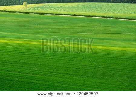 Beautiful Green Sping Rural Landscape