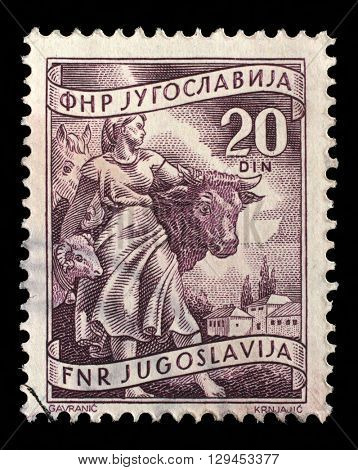 ZAGREB, CROATIA - SEPTEMBER 13: A stamp printed in Yugoslavia shows Livestock raising, inscriptions from series