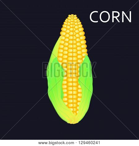 Sweetcorn with leaves, graphic vector illustration. Design element.