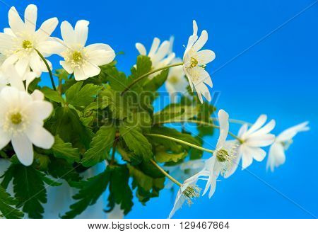 Bouquet Of Flowers Snowdrop Anemone