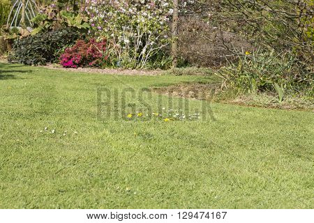 Pests parasite grass garden nature green gardening
