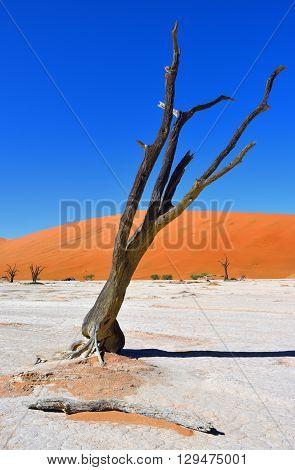 Deadvlei, Sossusvlei. Namibia