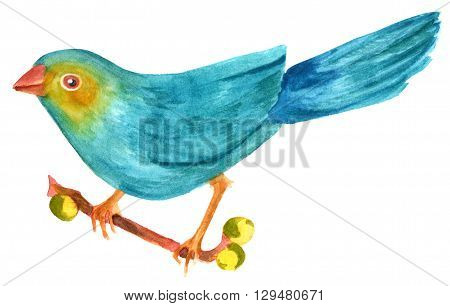 A watercolor drawing of a teal blue bird hand painted on white background