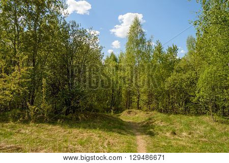 Sunny glade in the green spring forest.