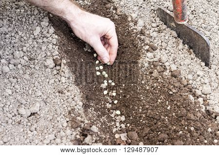 Man Who Sowed In The Ground Hoed