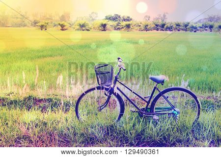 Vintage / retro color style effect with bokeh : Japanese old bike / bicycle in a green paddy field. Daily activity for families and everyone to exercise in rural area amid natural beauty and serenity.