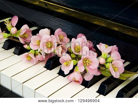 Rose quince on piano - condolence card