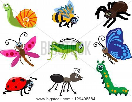 Detailed illustration insect isolated in flat style on white background. Collections of insects: butterfly, dragonfly, snail, spider, ladybug, ant, caterpillar, grasshopper, bee.