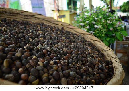 Granos de café seco, grano oro en pueblo productor