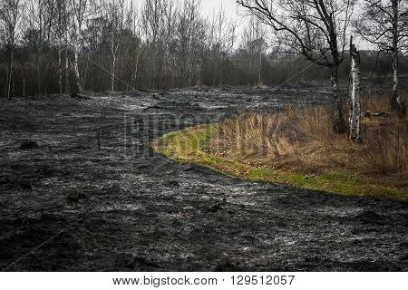 Burnt to ash black dry grass in the forest.
