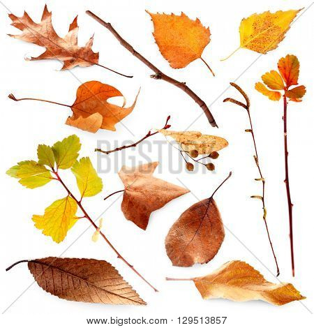 Collection of autumn dried twigs and leaves, isolated on white
