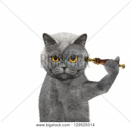 Cat looking through a magnifying glass loup -- isolated on white
