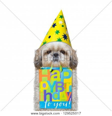 dog came to someone's birthday with a gift -- isolated on white
