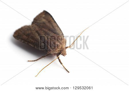 moth. night butterfly on the white background