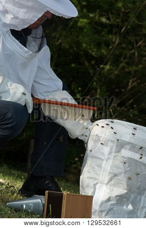 Working Male Apiarist In A Spring Season