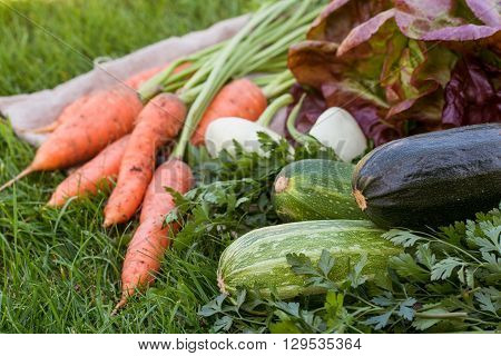 freshly picked vegetables and herbs on rustic background
