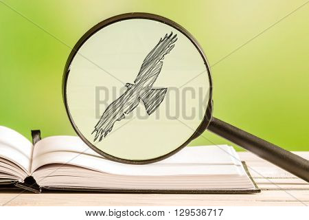Bird Search With A Magnifying Glass