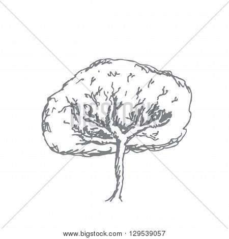 Vector monochrome sketch of one tree. Hand drawn tree
