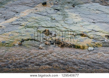 Water on geothermal surface in Icelandic nature