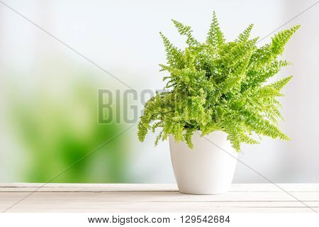 Fern In A White Flowerpot