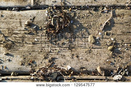 Background of an old board with the stones scattered on it fragments of sea cockleshells and seaweed