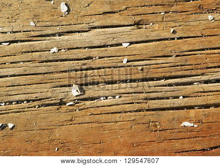 Background of an old board with the fragments of sea cockleshells scattered on it