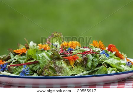 Garden Salad With Eatable Flowers