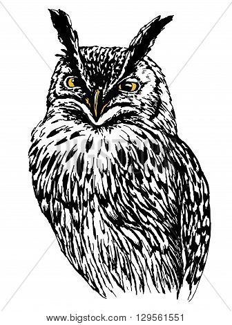 Owl hand drawn, black and white isolated vector  drawing  illustration