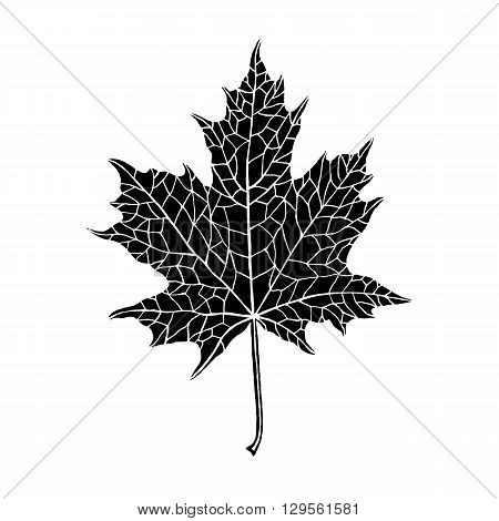 Vector hand-drawn silhouette of a maple leaf. Inversion. Trace ink drawing of a tree leaf. Fully isolated on white background easy to use and recolor. For seasonal holiday design. Botanical nature.