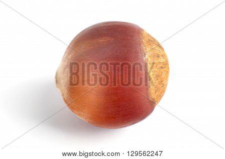 One Dried Hazelnut In Closeup