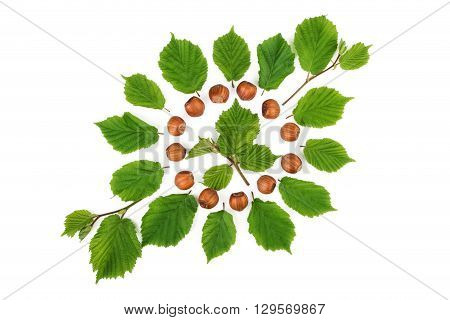 Green pattern with filbert nuts and nuts leaves. Flat lay top view.