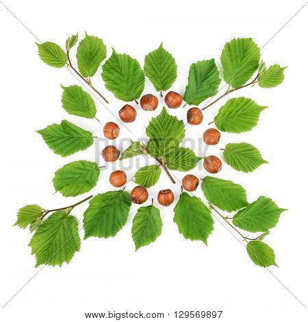 Arrangement of filbert nuts with leaves on white. Flat lay top view.