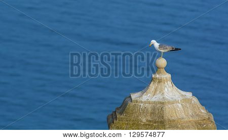 A lonely seagull standing on the top of a steeple