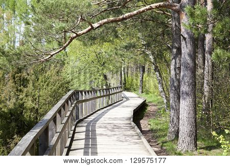 The wooden path in a countryside regional park (Lithuania).